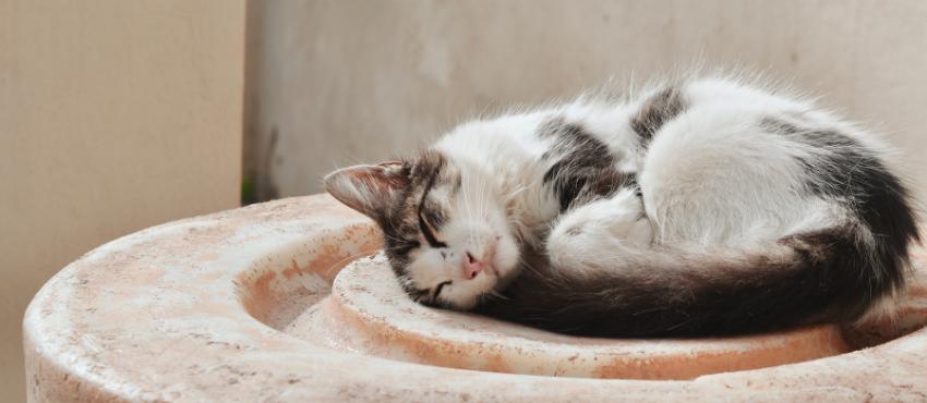 How to sleep better